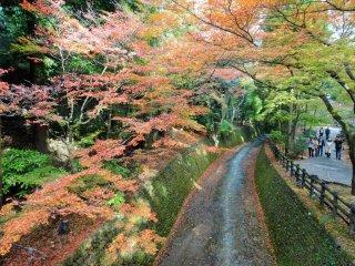 """""""Taman"""" kuil terdiri dari 250-300 maple sepanjang jalur sungai"""