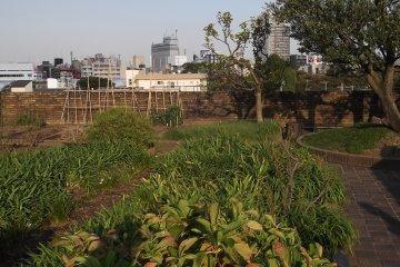 <p>Сад на крыше, до сих пор живёт и процветает</p>