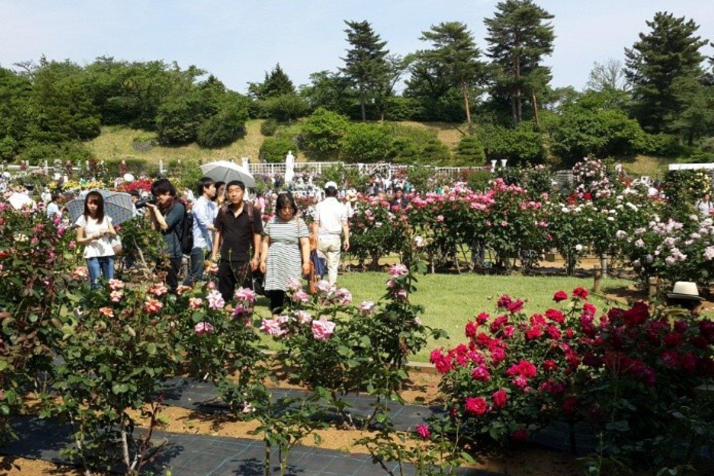 Taman bunga mawar di Kawasaki