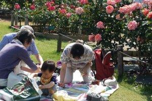 Keluarga muda Jepang menikmati keindahan taman bunga mawar