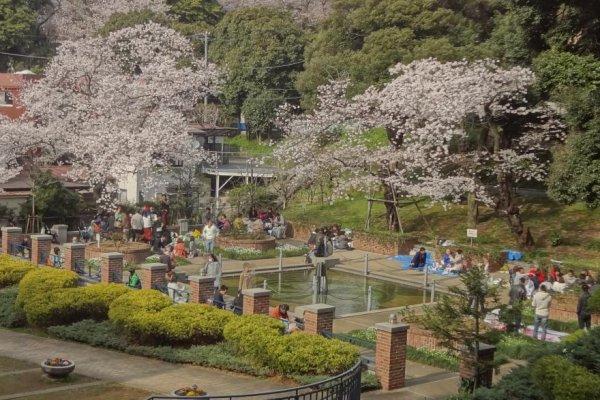 桜の頃のウォーターガーデン