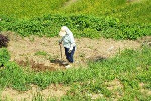 Woman working at Senmaida