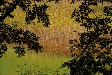黄绿色的火山池