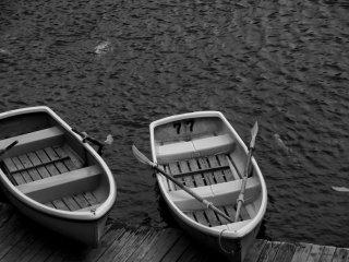 Des barques