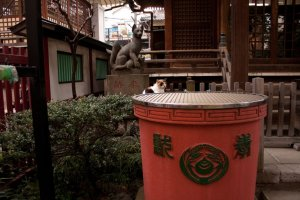 Stone tanuki and friend at Yanagimori shrine in Akihabara