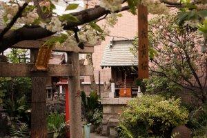 Stone tori, cherry trees and gardens at Yanagimori shrine in Akihabara