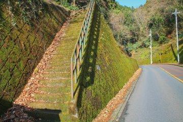 Мой маршрут проходил также и по улице - а затем вверх по лестнице снова в лес