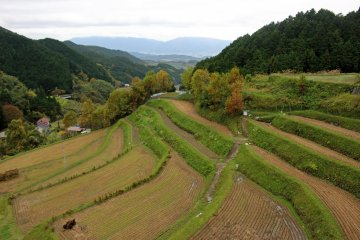 <p>Terraced rice paddies on the road to the shrine<br /> &nbsp;</p>