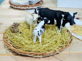 맛있는 치즈를 먹는 우리는 이 동물들에게 감사해야 한다