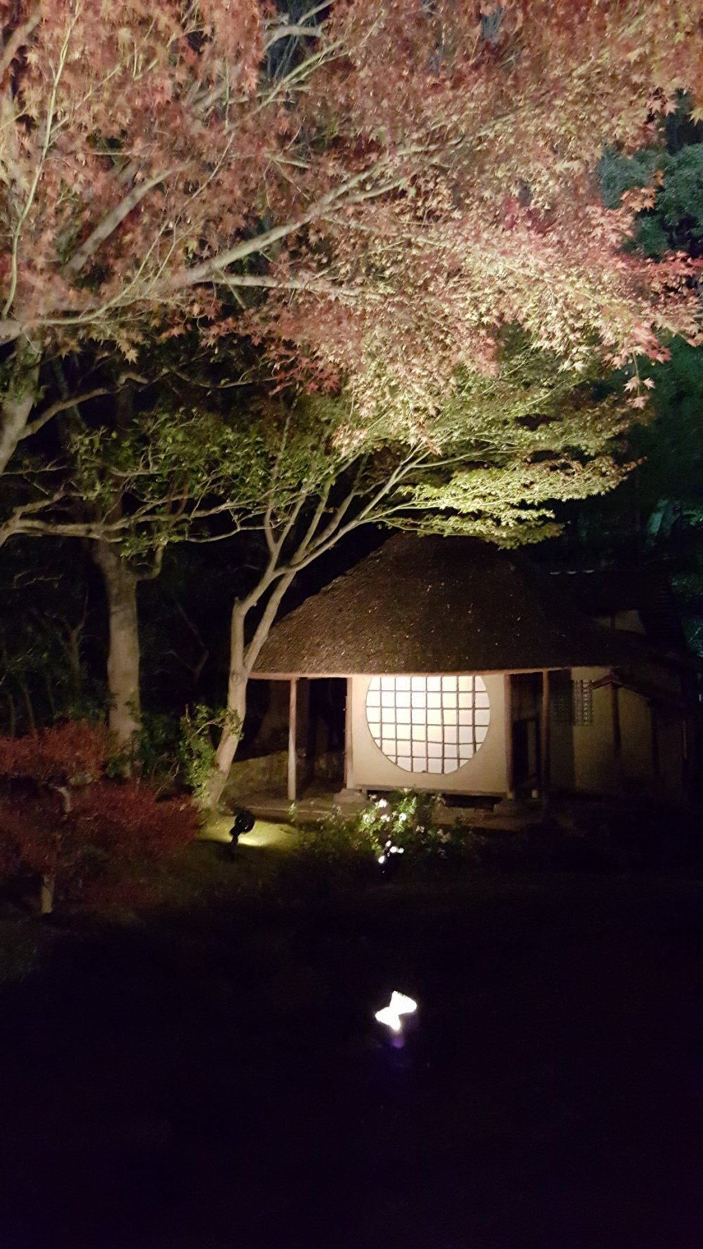 Tea house with fall colors