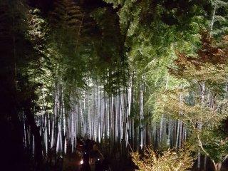 Hutan bambu dari atas.