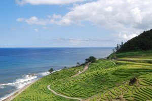 Senmaida rice paddies right by the ocean