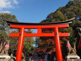 Portão torii com estátuas de raposas de ambos os lados