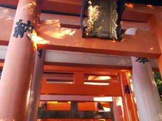 Apenas alguns milhares de portões torii vermelhos que se erguem na montanha