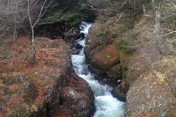 Dedaunan dan rerumputan akan berubah kuning menjelang musim gugur, menyajikan pemandangan alam seribu kali lebih cantik untuk Air Terjun Ryuzu.