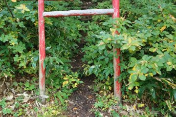 <p>A torii gate in the brush leads to a miniture shrine up a short but very steep trail</p>