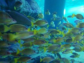 Một trong những bể cá