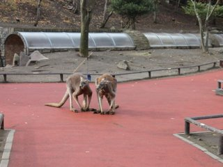 There is a part of the park where you can feed and touch animals. This includes kangaroos, dogs, cats and some other animals.