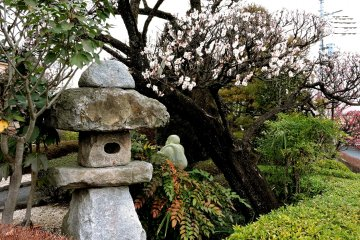 Stone lantern under white plum blossom