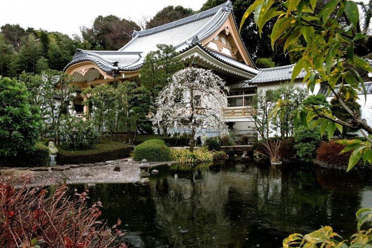 Bunga Plum di Kuil Shounji