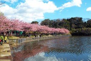 Pond at Miura-Kalgan