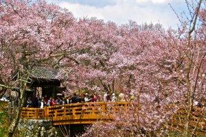 The Ou-Un-Kyo (Blossom Cloud Bridge), the centerpiece of Takato Castle Ruins Park