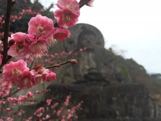 Behind the blossoms is the stone carved Buddha.
