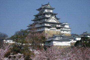 Весной, фотография с вишней и замком Химэдзи на заднем плане