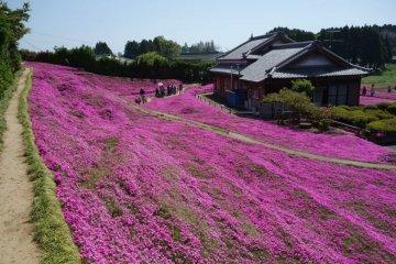 สวนดอกไม้แห่งความรักที่เมืองชินโทะมิ
