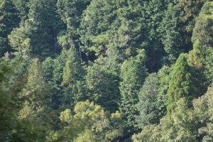 Bukit di sekitar sungai yang ditumbuhi pepohonan rindang