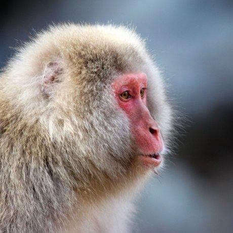 Jigokudani Yaen Koen (Monkey Park)