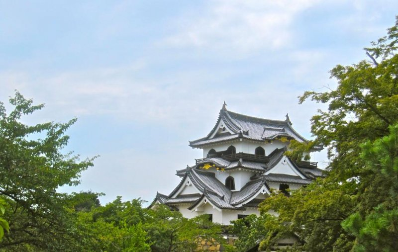 Hikone Castle Tower rises above the trees in the Honmaru