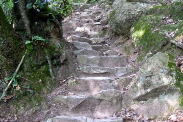 The trail to the summit of Kumatsuyama. It alternates between bare earth and tree roots, and steep stone stairs like these