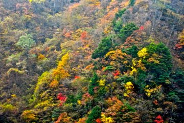 Autumn foliage on the way to the ropeway (November)