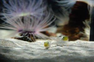 Anémone et poissons dans la zone des couleurs