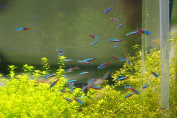 Small fishes in the riverside