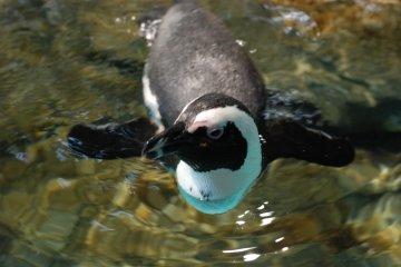Penguin in the behavior zone