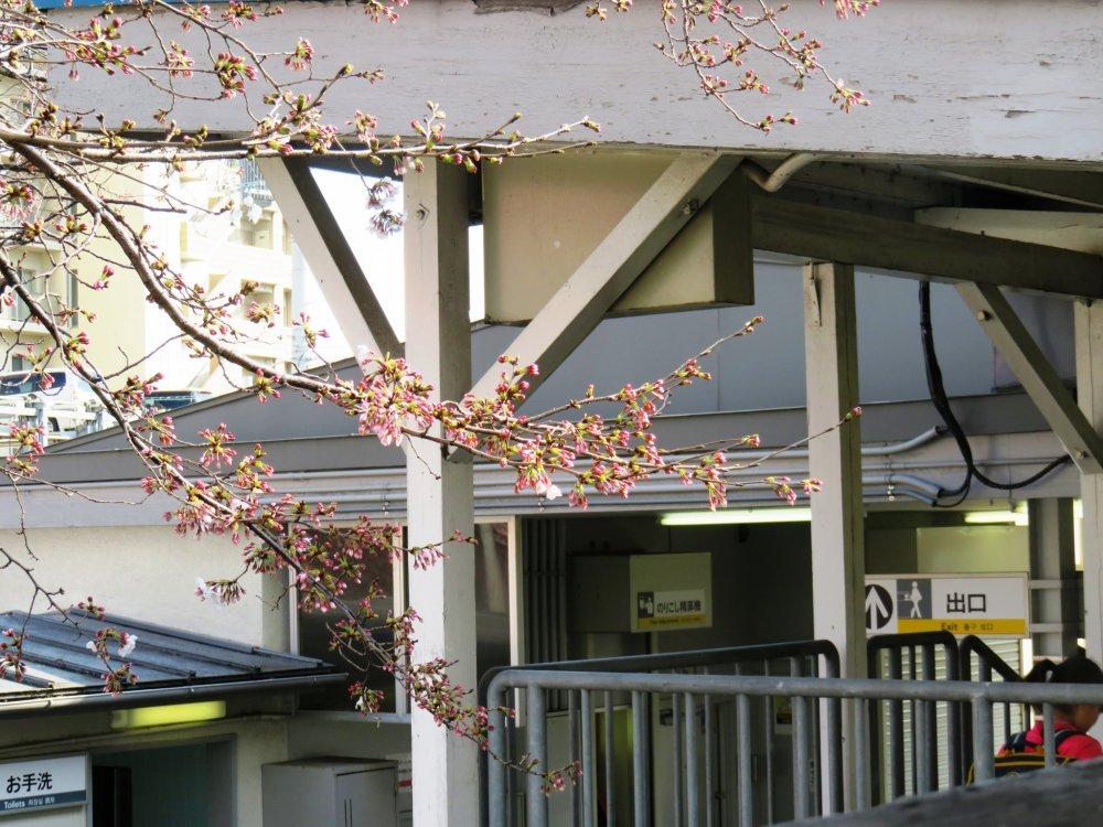 As flores em contraste com a envelhecida mas funcional estrutura da estação Nankai de Haruki