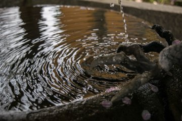 Flower petals floating on the surface of the washbin