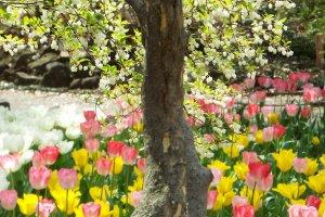 Yokohama Park - Near Japanese Garden