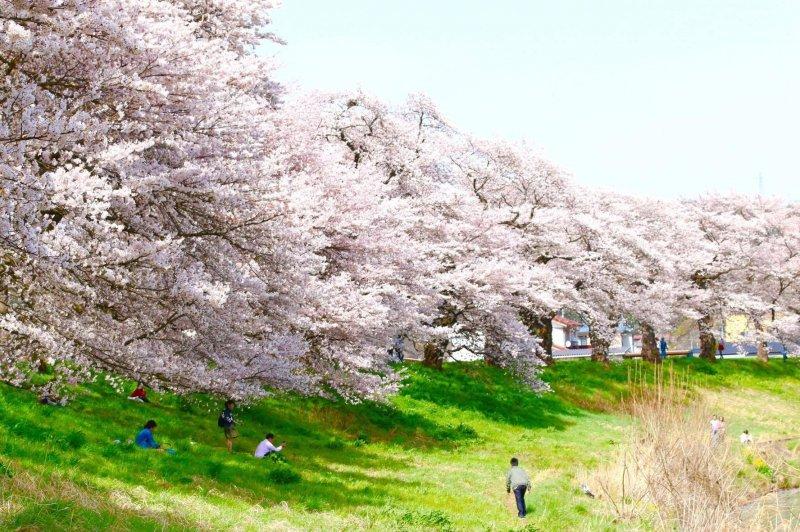 在一個大太陽的春天下,在樹蔭下乘涼