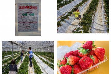 Finish your trip with an all you can eat strawberry feast