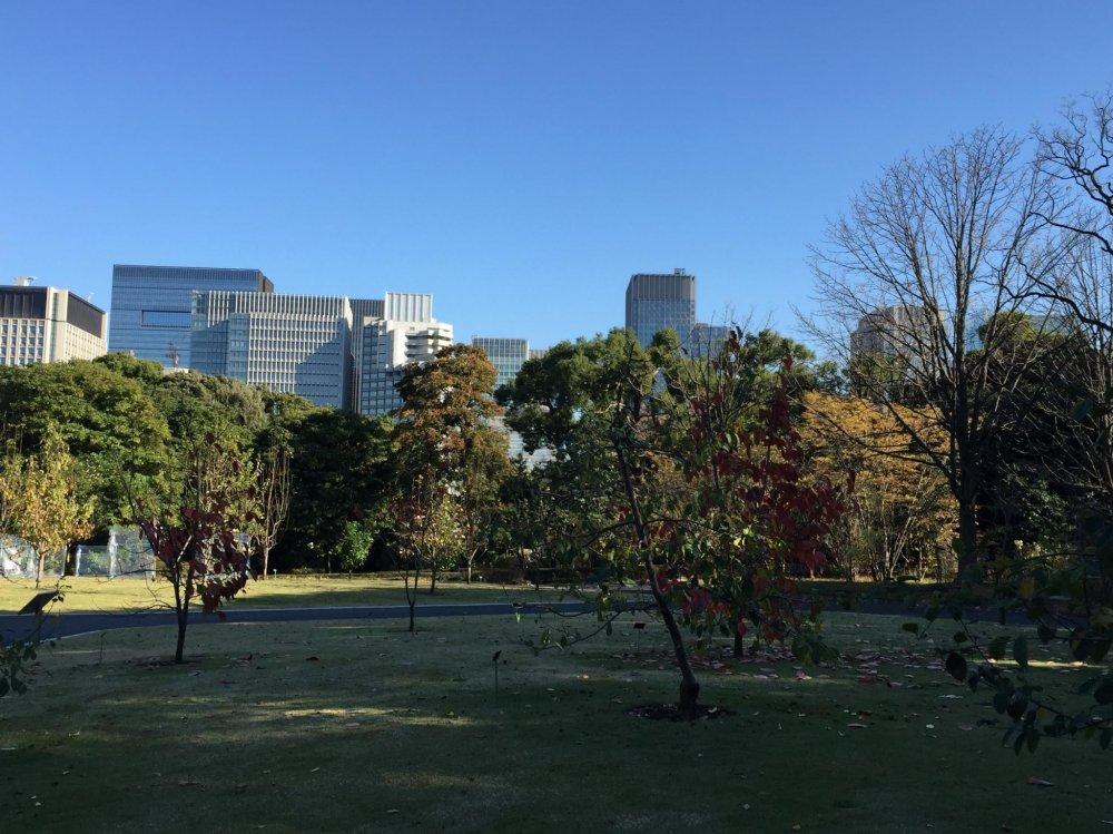 Un parc à proximité du quartier d'affaire