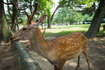La Préfecture de Nara