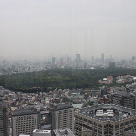 Discovering Meiji Shrine