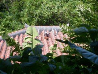 Les maisons sont souvent enveloppées de verdure