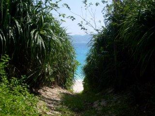 Un chemin vers la plage depuis le camping