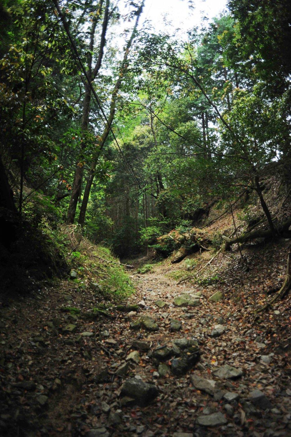 Le sentier qui grimpe dans la montagne