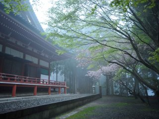 Lecture hall, Daikodo, and the last of the cherry blossoms