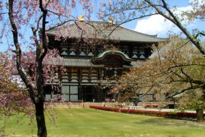Le Daibutsu-den (salle du grand Bouddha) au printemps